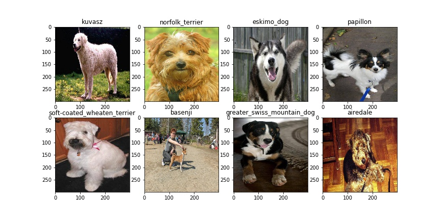 Transfer learning for image classification with Keras